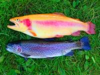 girlfishing.dk, agernæs saltvands put and take