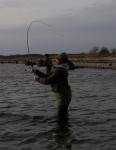 fiskeri møn, girlfishing.dk, ifish.dk