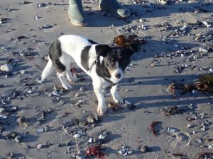 fiskeri, hund, mariendal strand