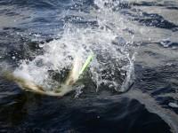 Fiskeri, girlfishing.dk gedder