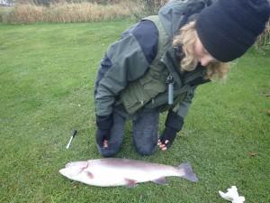 regnbueørred fiskeri munkbro put and take girlfishing.dk